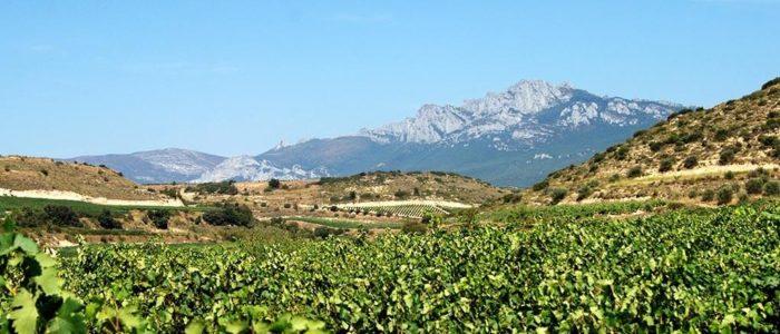 La sierra de Cantabria vista desde el viñedo alavés