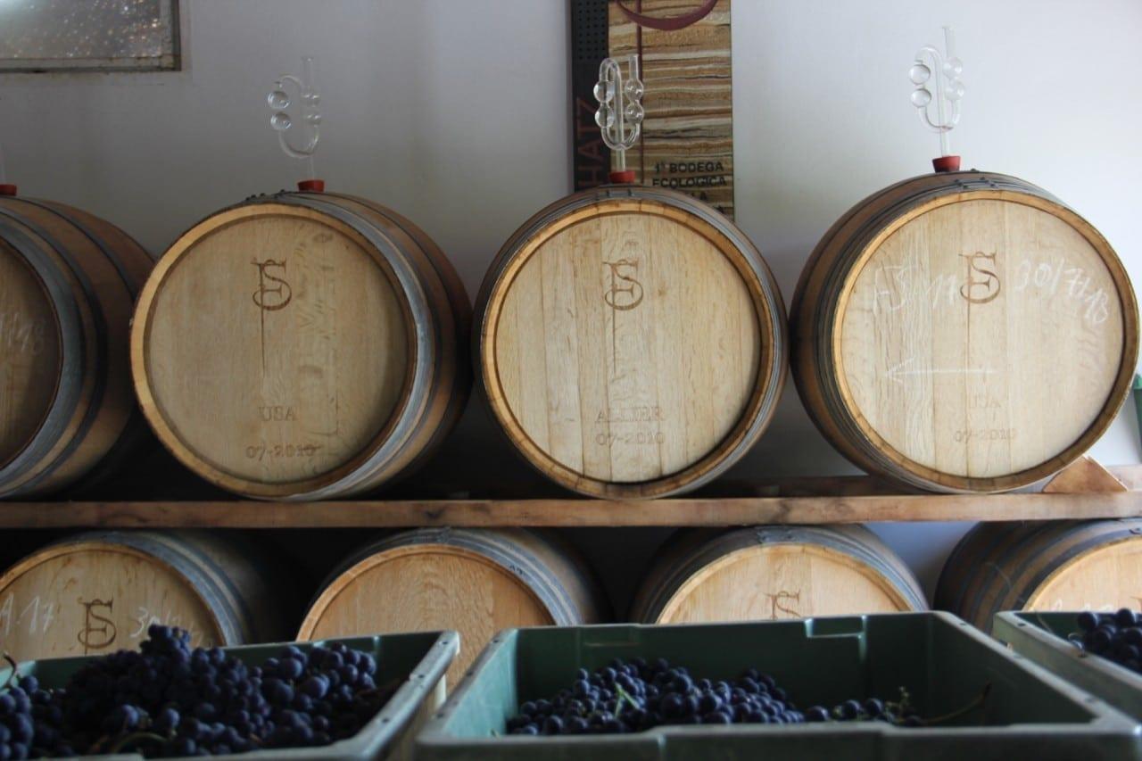 barricas-uva-vendimia