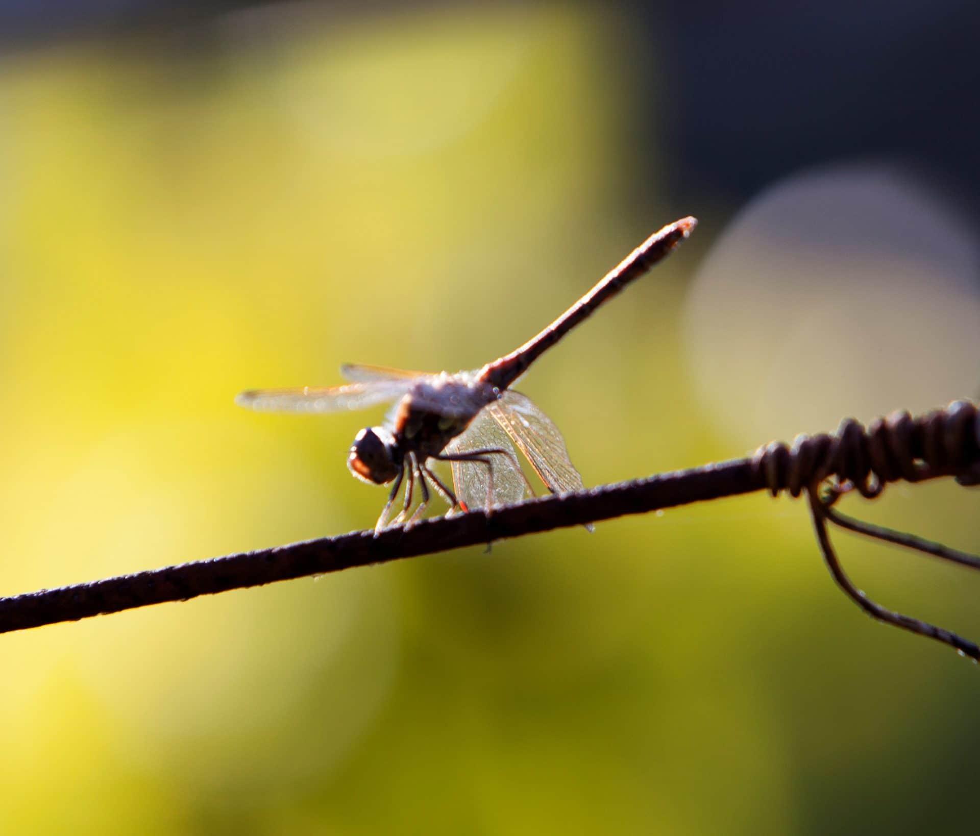 biodiversidad-vinedo