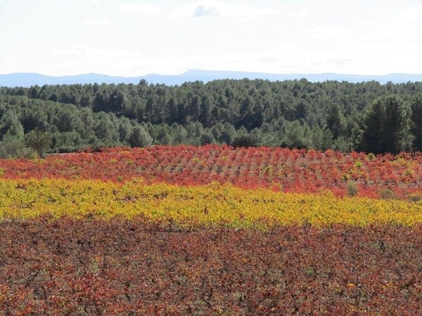 paisaje-viticola