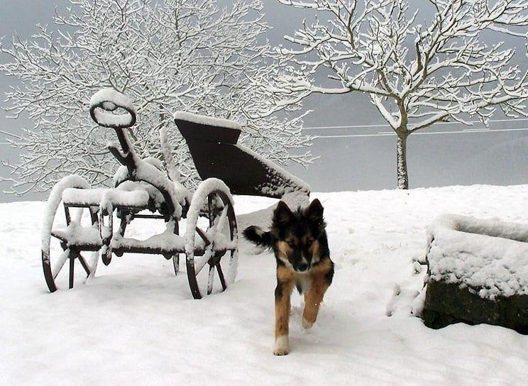 urkizahar-invierno