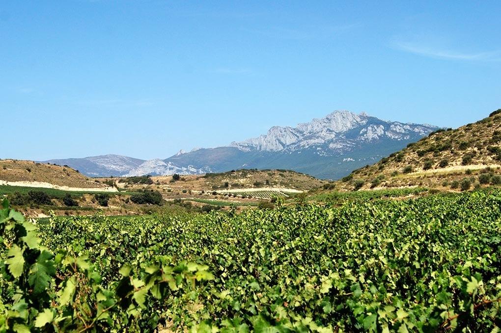 viñas-viejas-rioja
