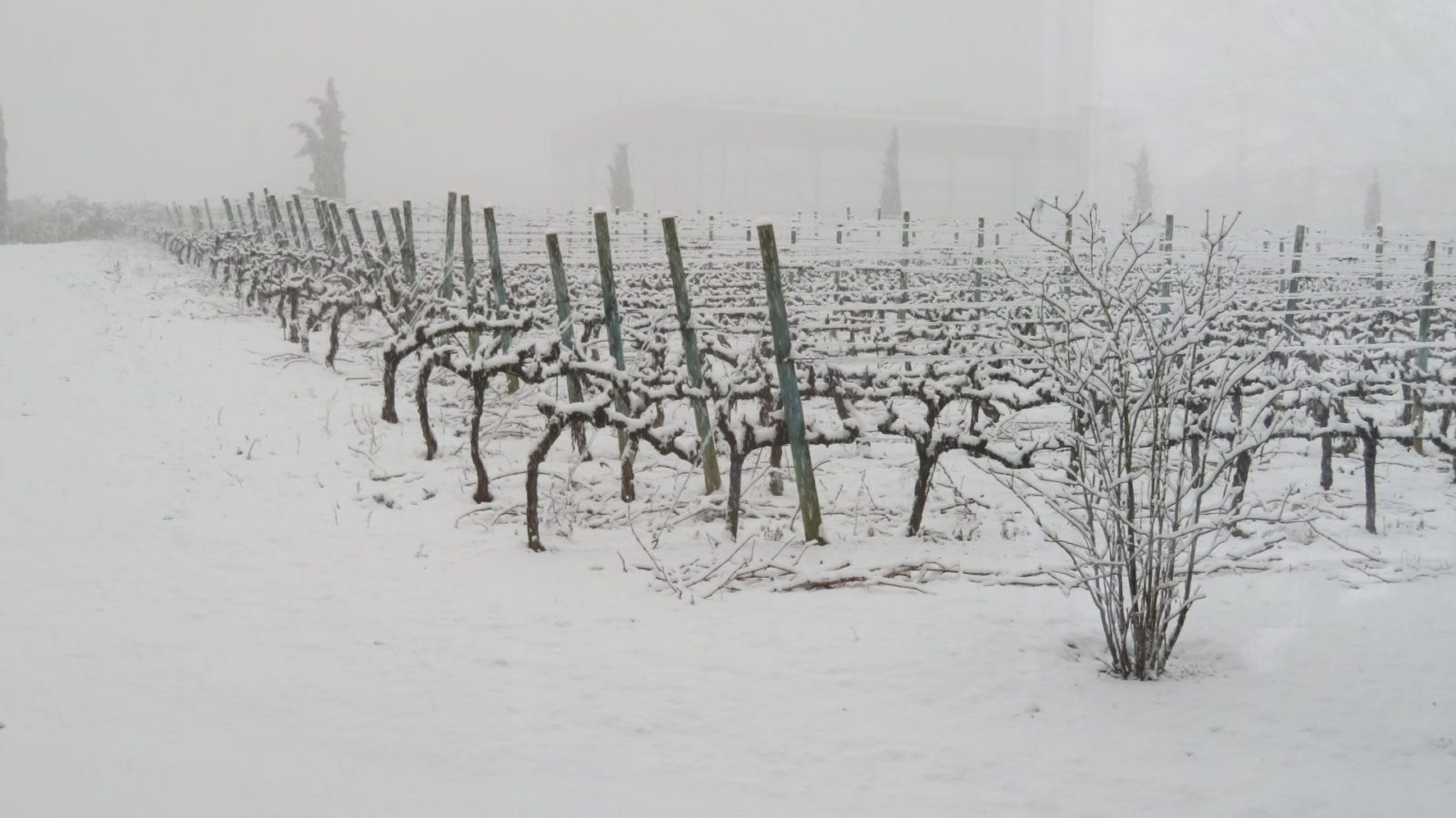 vinedo-nevado-rioja